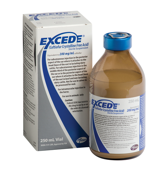 Excede_250ml_Bottle