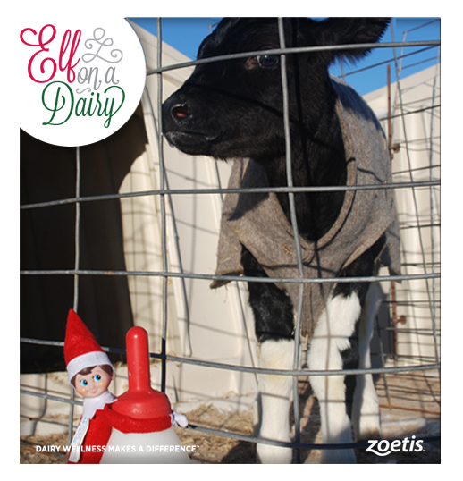 See what Elf on a Dairy is up to on the Dairy Wellness Facebook page.
