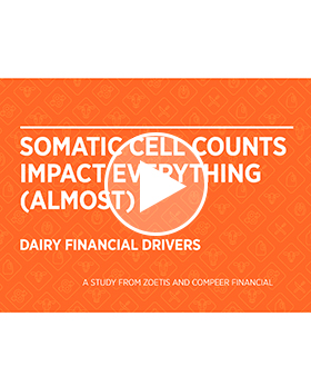 Dairy financial drivers SCC
